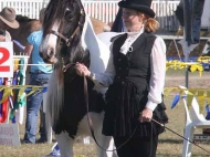 Gypsy Cob mare, Pinto Gypsy Horse, Gypsy Vanner, for sale, dressage, performance horse, Gold Coast Show, Show Jump, Stallion at Stud, Sweetcheeks of High Street Gypsy Cobs.