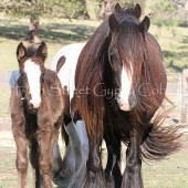 The beautiful Madonna Filly & daughter