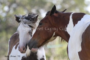 Lion Heart with her big pal Drum Filly Eva