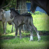 Her filly to Blue Suede just born