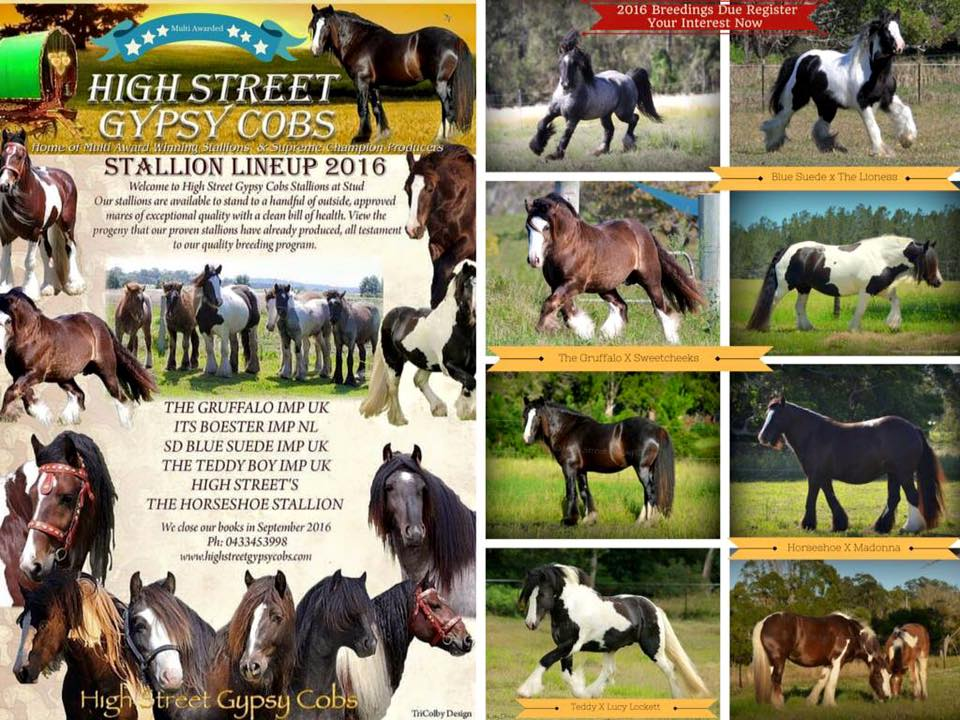 breedings, stallions at stud, gypsy cobs stallions at stud, high street gypsy cobs, heavy horse australia, gypsy horse foals, for sale