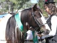 Gypsy Horse. Gypsy Cob for sale. High Street Gypsy Cobs. The Lioness.. GP The Teddy Boy Imp Uk
