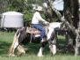Primrose of High Street Gypsy Cobs Imp UK