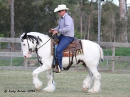 Gypsy Cob for sale, Gypsy cob, Gypsy Horse for sale, Gypsy Vanner for sale at High Street Gypsy Cobs. Gypsy Cob. High Streets Royal Occasion Gypsy Cob Gypsy Horse for sale at High Street Gypsy Cobs
