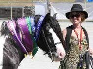 Gypsy Cob. Gypsy Horse. Gypsy Horse Stallion GP The Painted Warrior IMP UK for sale. Gypsy Cob. Gypsy Vanner. High Street Gypsy Cobs, Australia.
