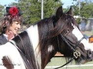 Gypsy Cob for sale, Gypsy cob, Gypsy Horse for sale, Gypsy Vanner for sale at High Street Gypsy Cobs. Gypsy Cob. Gypsy Horse stallion. Gypsy Cob Stallion. High Street Gypsy Cobs. GP Teddy Boy in the ring
