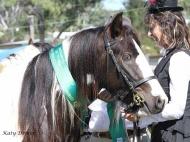Gypsy Cob for sale,Gypsy cob, Gypsy Horse for sale, Gypsy Vanner for sale at High Street Gypsy Cobs. Gypsy Cob. Gypsy Horse stallion. Gypsy Cob Stallion. High Street Gypsy Cobs. GP Teddy Boy in the ring
