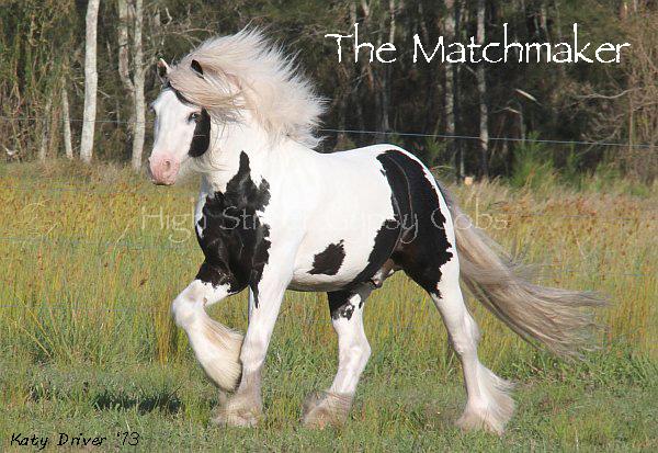 The Matchmaker - Stallion at Stud