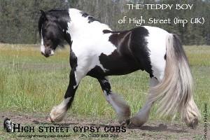 The Teddy Boy of High Street.