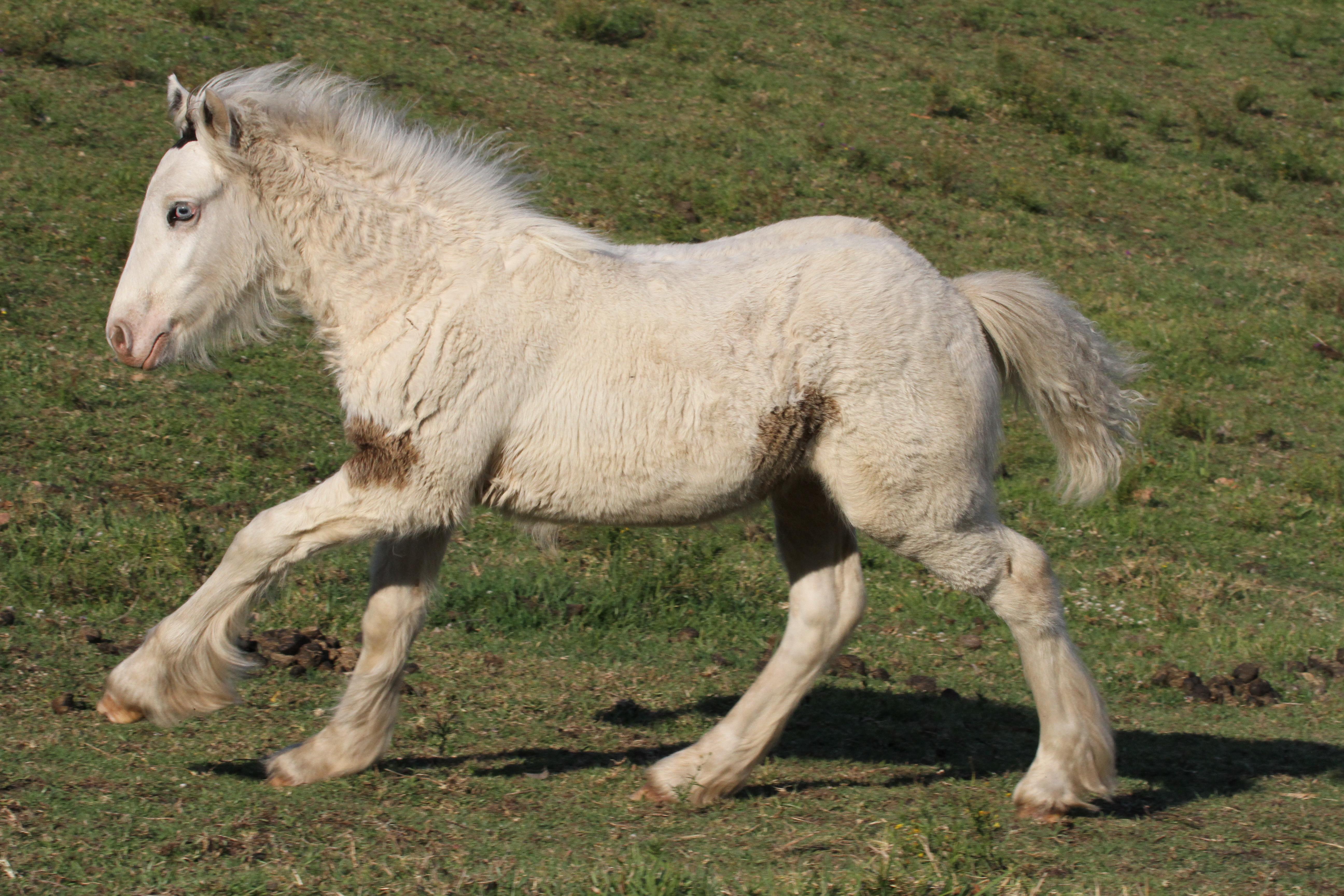 2012 foal High Streets Ondine