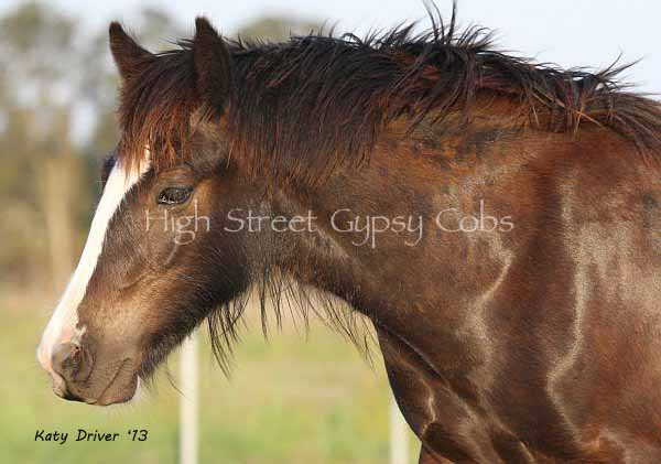 High Streets The Horseshoe Stallion