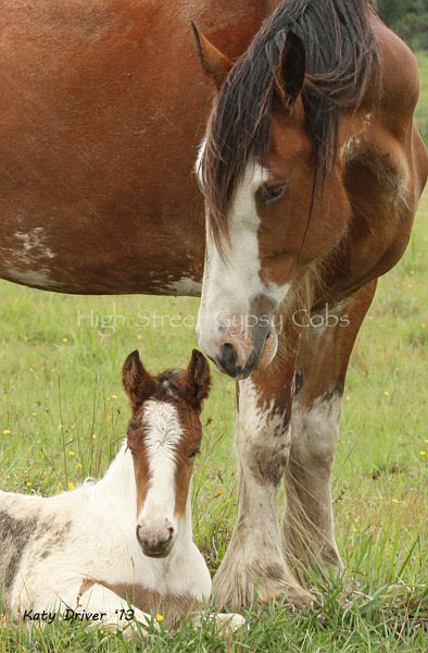 Yoothapina Gumnut & her Drum Foal High Street's Sovereignty from ITS BOESTER IMP