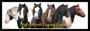 High Street Gypsy Cobs on Facebook