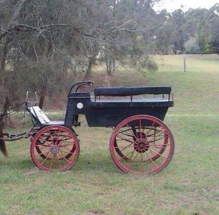 10 seater Wagonette For Sale