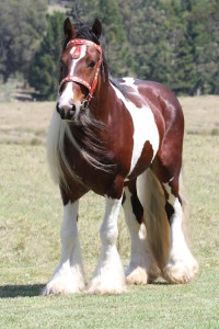 SIRE: ITS BOESTER IMP