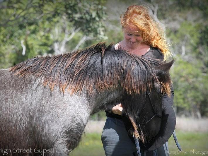 gypsy cob for sale australia, High Streets Blue Velvet, Gypsy Horse, Gypsy Vanner, Blue Roan, SD Blue Suede, GD of SD Black Jack